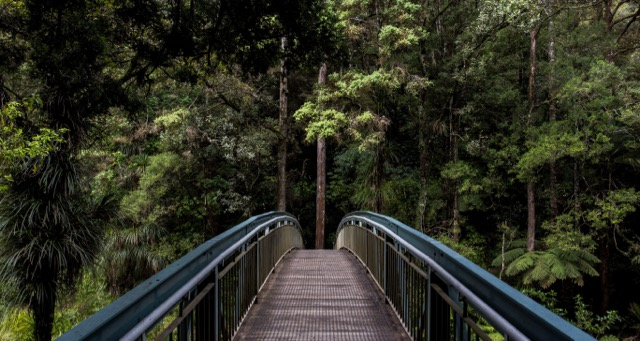 bridge leading into a tropical forest